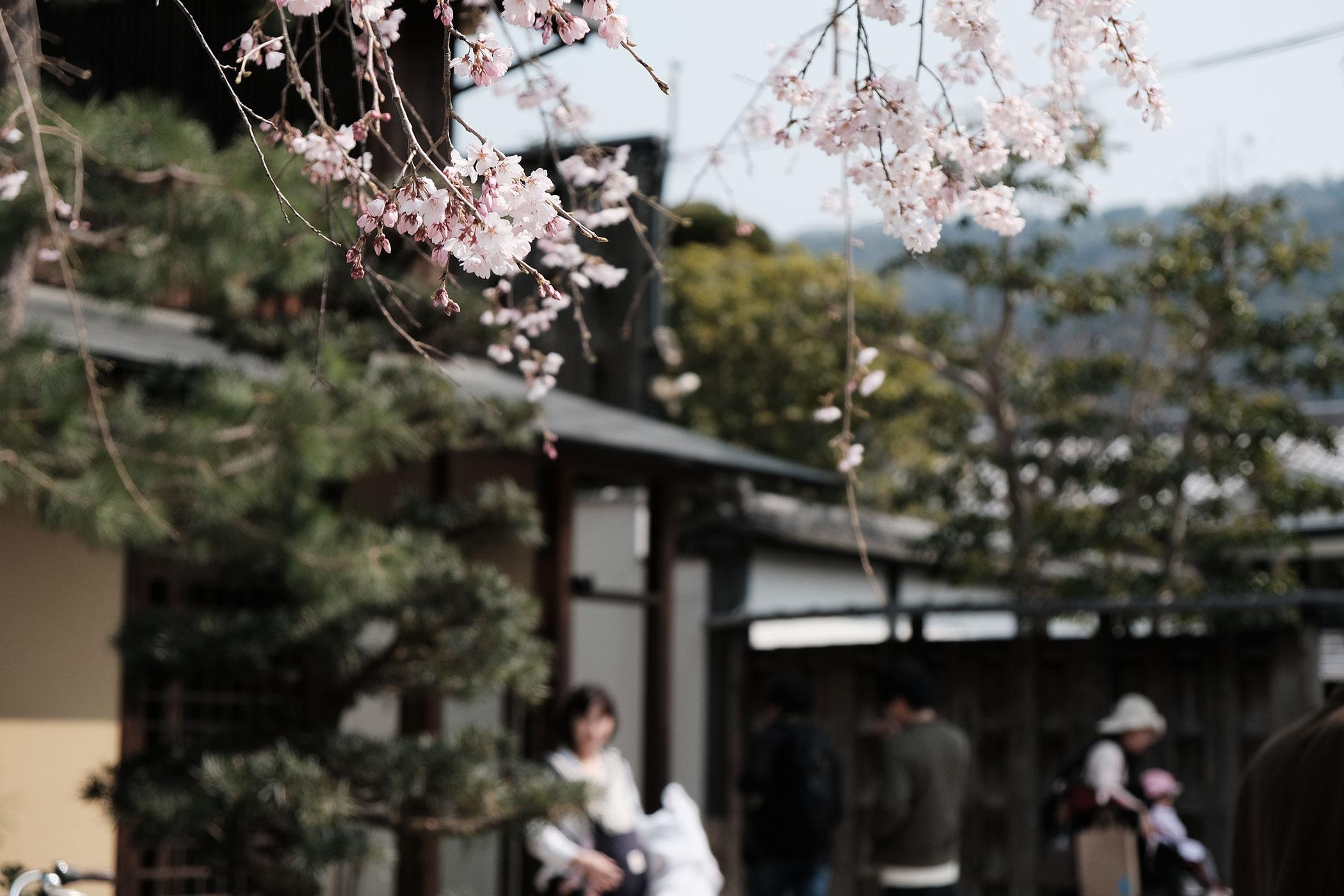 待望の初出店!ブルーボトルコーヒーの関西第一号は京都の南禅寺に ブルーボトルコーヒー 京都カフェ (BLUE BOTTLE COFFEE KYOTO) 桜